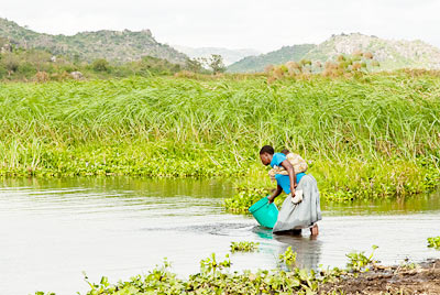 Masurua Swamp
