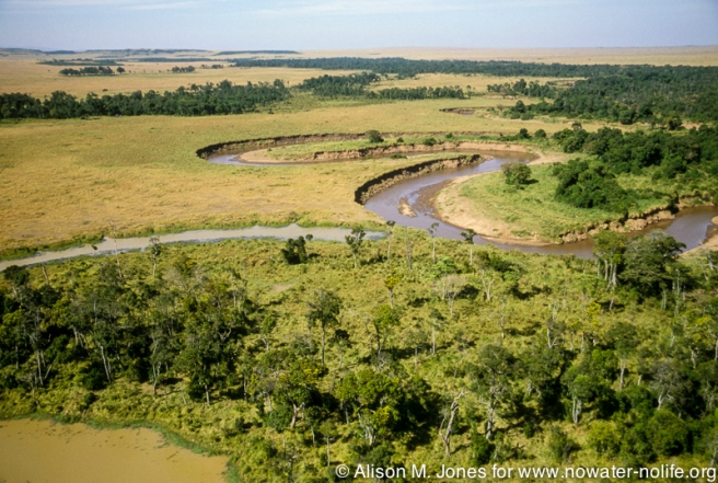 The Mara River would seem to be pristine and unfettered as it runs from Kenya's highlands to Tanzania's Lake Victoria shores...