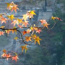 USA: Kentucky, Cumberland River Basin, Daniel Boone National Forest