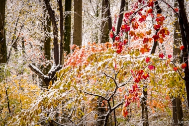 US:  New Jersey, Raritan River Basin, Hunterdon County, Tewksbury Twp., Mountainville, Burrell Road, early snowfall in hardwood forest