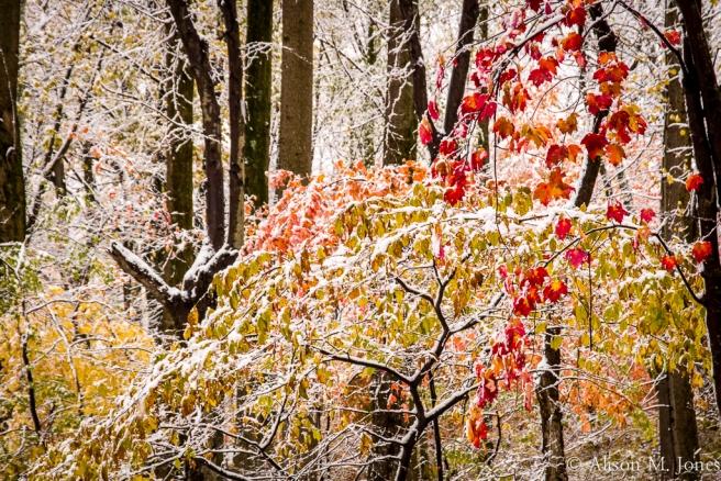 US:  New Jersey, Raritan River Basin, Hunterdon County, Tewksbury Twp., Mountainville, Burrell Road, early snowfall in hardwood forest