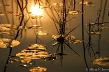 Botswana: Okavango Delta, wetlands at sunset