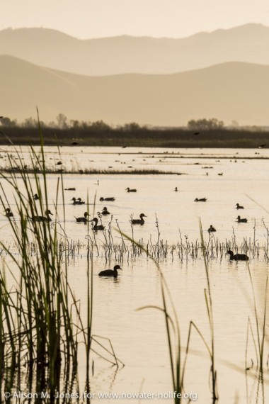 A rare wetlands scene in the San Joaquin River Valley, San Luis National Wildlife Refuge, CA