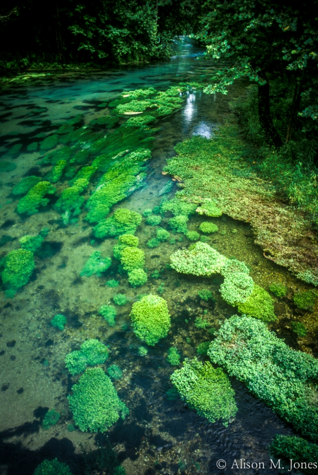 USA: Missouri, Near Van Buren, water plants growing below surface of Big Stream (Ozarks).