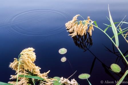 Botswana: Okavango Delta, Moremi Game Reserve, Xigera Camp.