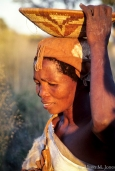 Botswana: Okavango Delta, Gudigwa Camp, San Bushman, Woman gatherin herbs.