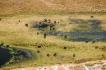 Botswana: Okavanga Delta, aerial of elephant, (loxodonta africanus)