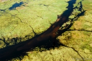 Botswana: Okavango Delta, aerial view of channels in wetlands