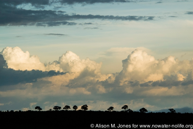 Kenya: Trees clouds landscape