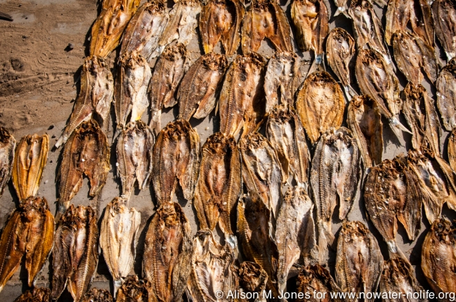 Africa:  Kenya; Karakol, dried tilapia headed to markets in Kisimu, Nairobi and elsewhere