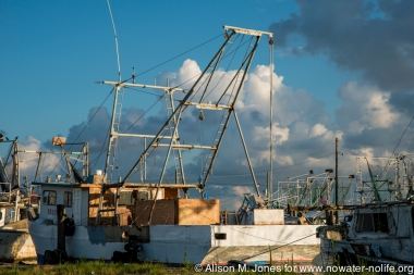 USA:  Louisiana, New Orleans, Gulf Coast, Mississippi River Delta, Shrimp boats in Buras