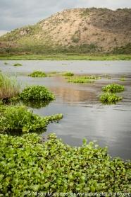 Tanzania: No Water No Life Mara River Expedition, Mara River, Masarua Swamp, water hyacinth