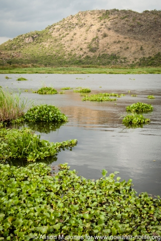 Tanzania: No Water No Life Mara River Expedition, Mara River, Masarua Swamp, water hyacinth