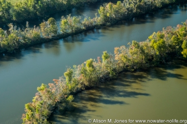 USA:  Louisiana, Aerial photo of Atchafalaya Basin area,