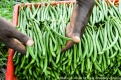 Kenya: green beans