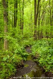 USA: New Jersey, Upper Raritan River Basin, Oldwick, Rockaway Stream corridor,