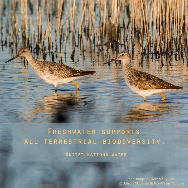 BiodiversityFreshWater