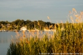 USA: New York, Lloyd Harbor, invasive phragmites reeds at sunset