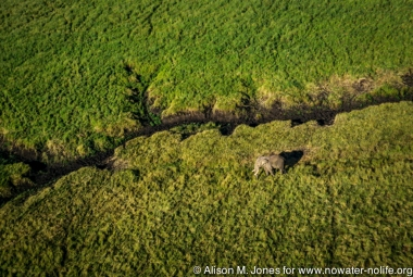 Kenya: Maasai (aka Masai) Mara National Reserve, Mara Conservancy, Mara Triangle, Trans Mora aerial (from helicopter), elephant near muddy tributary of Mara River,