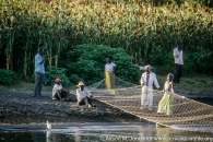 Kenya: Luo fishing village, men and women pulling in fishing lines.