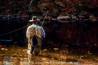 New Jersey: Upper Raritan Basin, Hunterdon County, Tewksbury Township, Califon, River Road, South Branch of Raritan River, man fly fishing in river for heritage trout among fallen fall foliage,