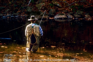 New Jersey: Upper Raritan Basin, Hunterdon County, Tewksbury Township, Califon, River Road, South Branch of Raritan River, man fly fishing in river for heritage trout among fallen fall foliage,
