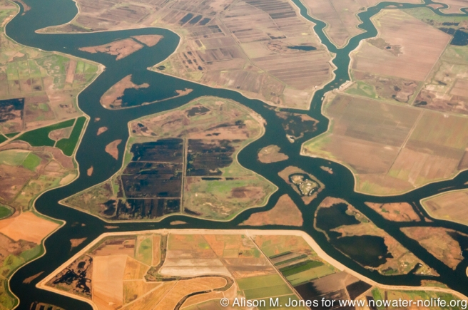 USA  California, aerial view of confluence of San Joaquin (on R) and False River (on L), NE of Antioch