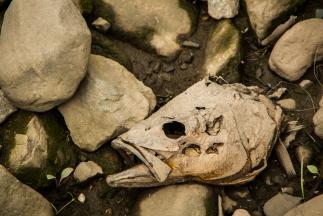 Dead fish, NJ