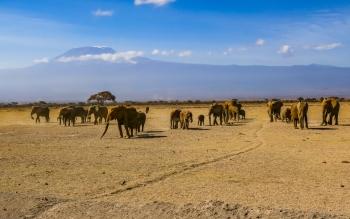 Amboseli Elephant 1.jpg
