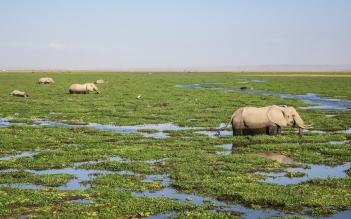 Amboseli Elephant 3.jpg