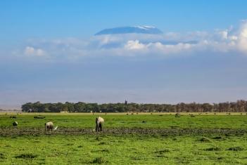 Amboseli Elephant 4.jpg