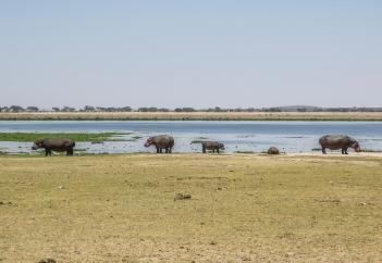 Amboseli Hippo 1.jpg