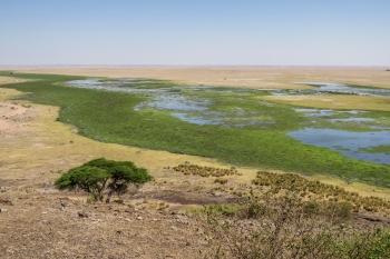 Amboseli Wetlands 1.jpg