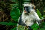Jozani National Park, Tanzania