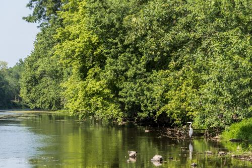 Anadromous Fish and Dams in NJ's Raritan River – NO WATER NO LIFE BLOG