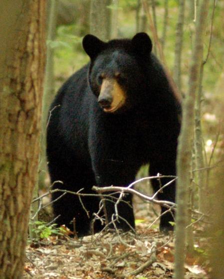 bear1_01